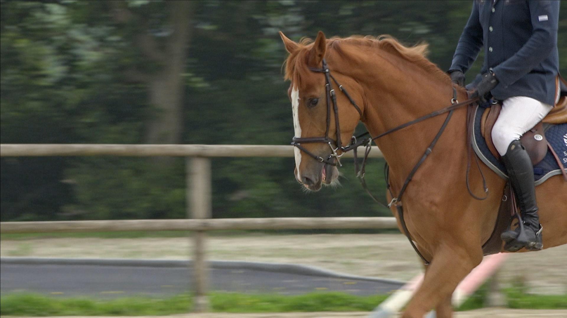 La terre des chevaux attire des cavaliers internationaux