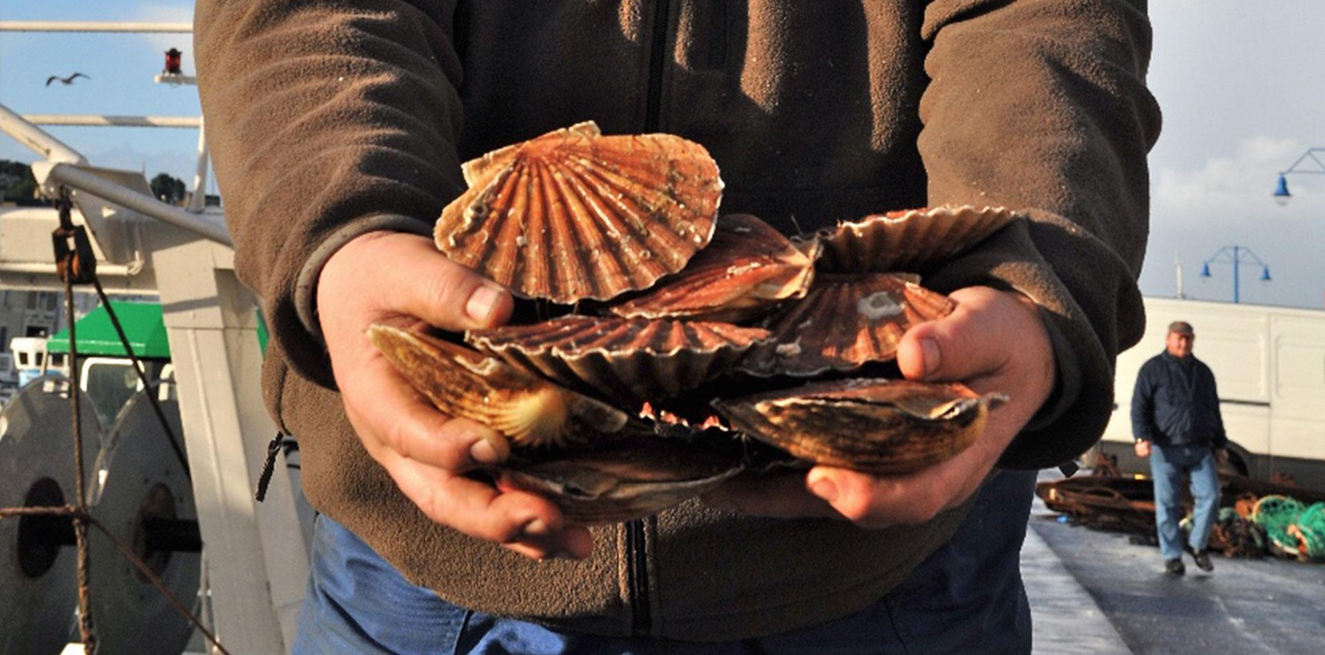 """La Grande Débarque : """"nous sommes aujourd'hui la première région de pêche en France pour les coquillages"""""""