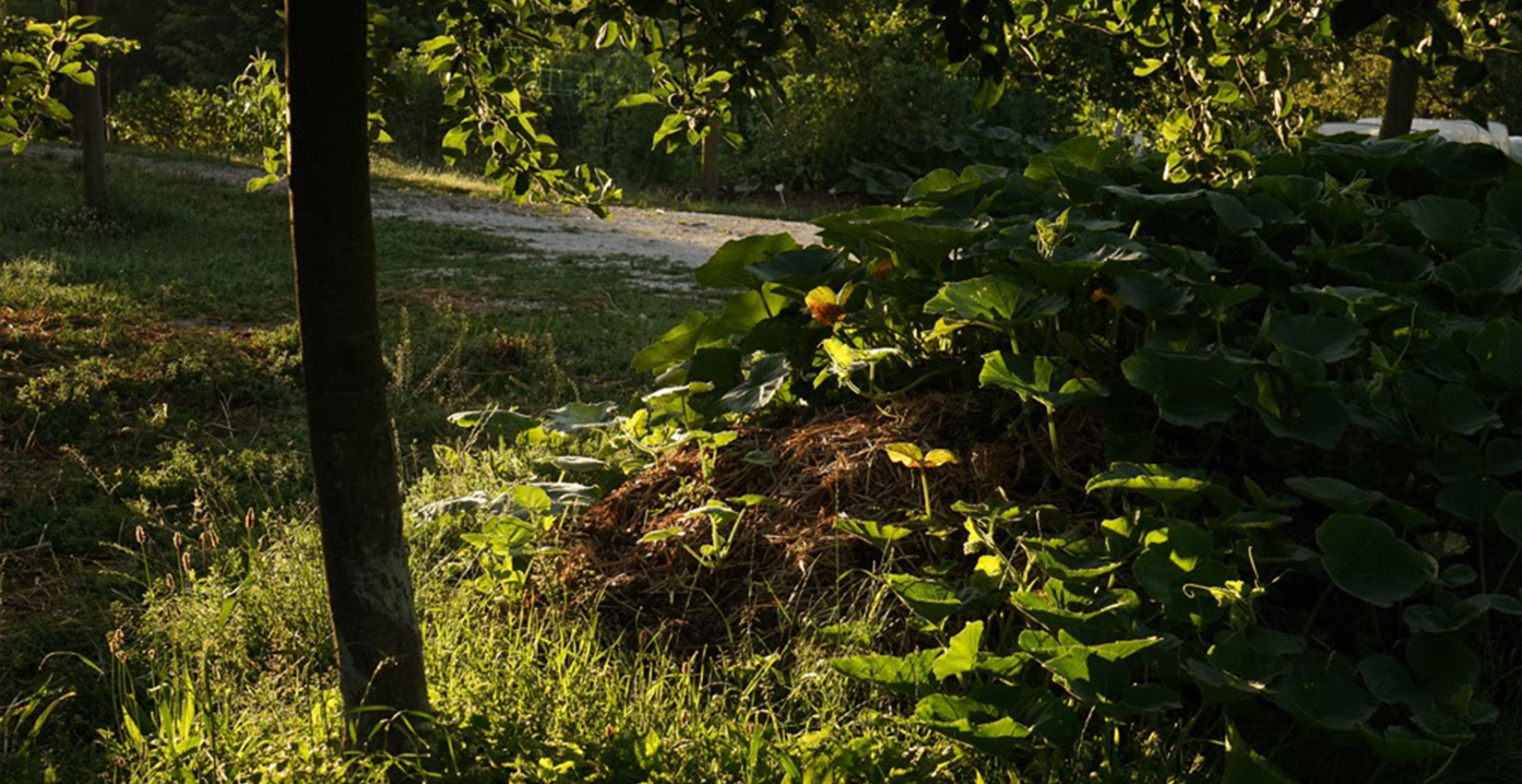Agroforesterie et Butte ©Frédéric Sauvadet