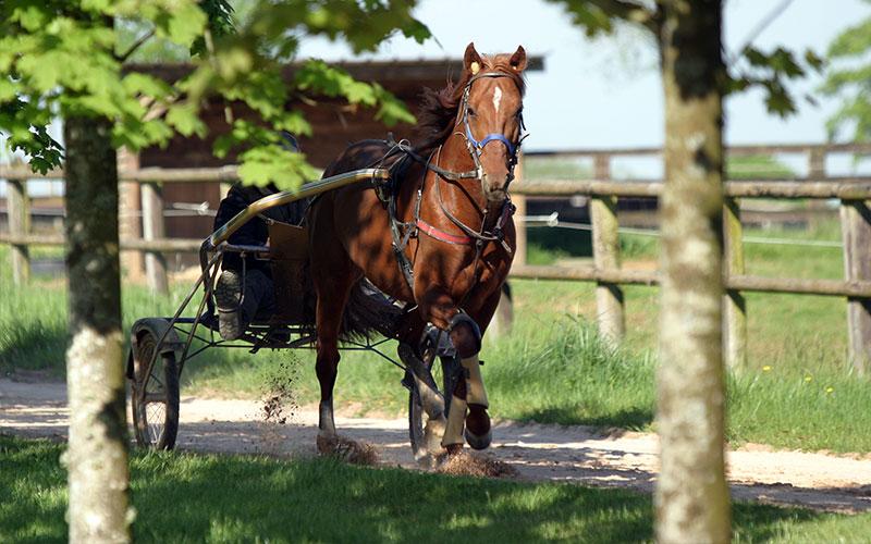 Filière Equine